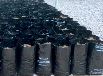 Freshly Planted Seed in the correct planter bags